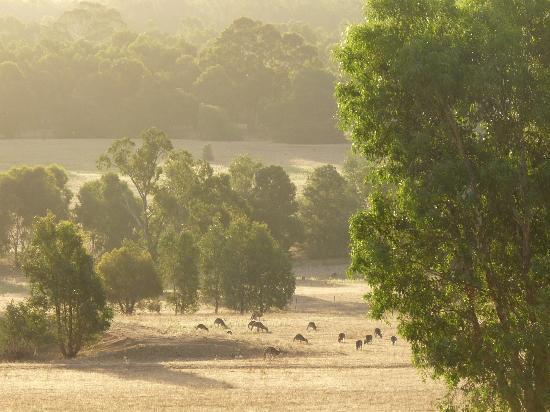 Meringa Springs 사진