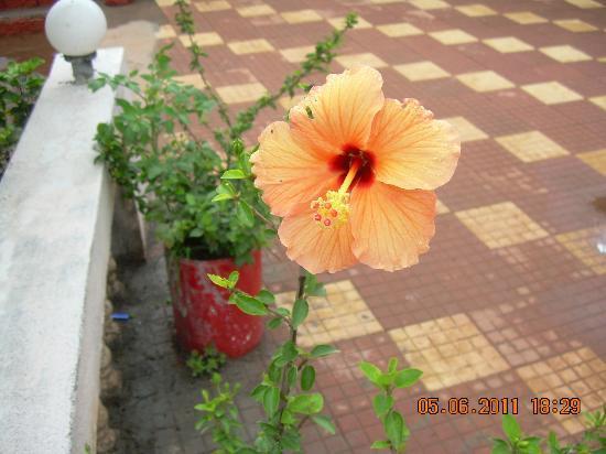 Bharat Hotel : hotel & ground