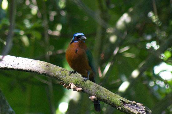 Arnos Vale Waterwheel and Nature Park: A bird we saw nearby
