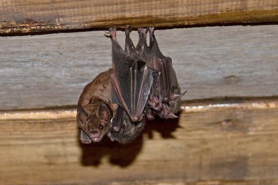 Arnos Vale Waterwheel and Nature Park : Bats!