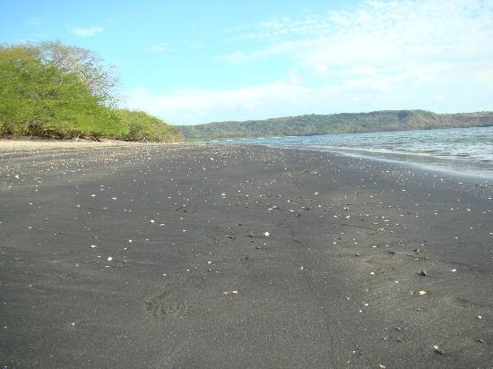 Allegro Papagayo: Sea Shells Every Where!