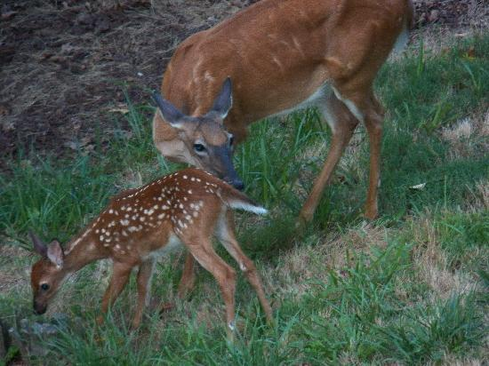 Fox Run Resort: Deer & Fawn