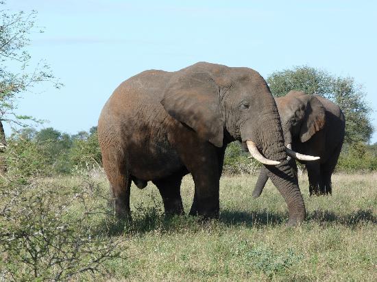 Bushwise Safaris: We saw several herds of Elephants