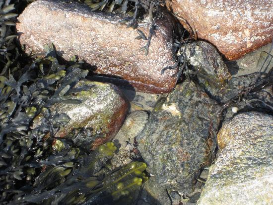 Cornish Heritage Safaris: Sea Life in Tide pool by St. Michael's Mount