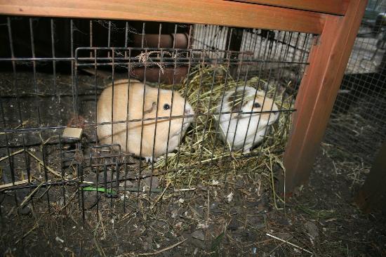 Bonville's Court Holiday Park: the pets