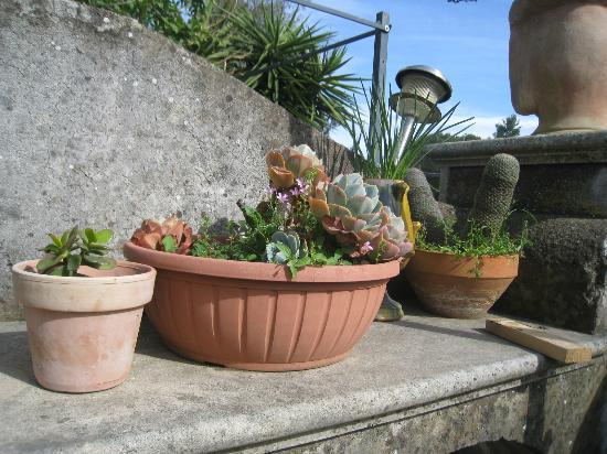 B&B La Tenuta : alcune piante del terrazzo
