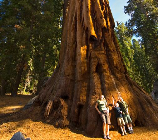 Wuksachi Lodge: Family at base of giant sequoia tree
