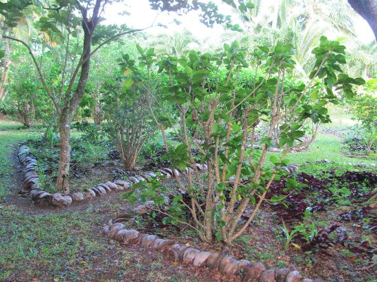 Maire Nui Botanical Gardens: coconut edges for the gardens