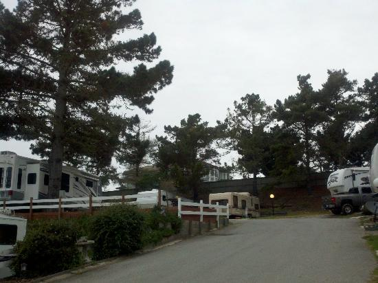 Pines in Pelican Point RV Park