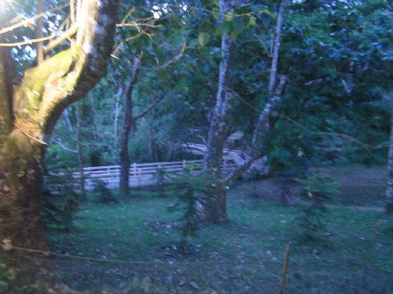 Picnic Grove: Rich foliage when walking the eco trail