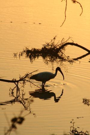 Mahoora Tented Safari Camp Bundala: An evening view