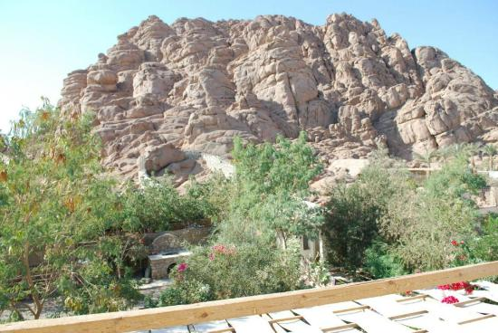 Sinai Old Spices: roof view