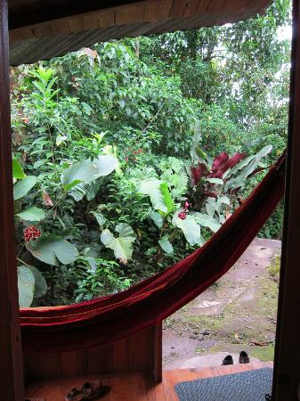Cabanas Armonia y Jardin de Orquideas: looking out from the room