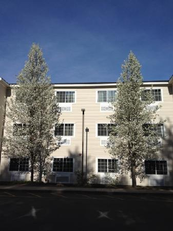 Holiday Inn Express North Conway: trees in bloom, April 2012