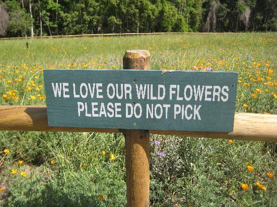 Sea Pines Forest Preserve: Wildflower area