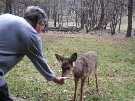 Mountainside Villas: Feeding deer at patio