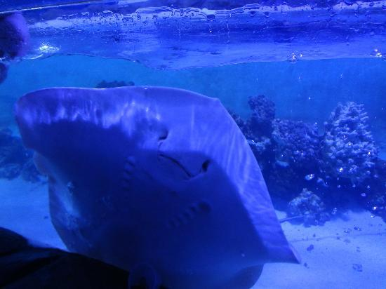 Aquarium of Boise: feeding the rays
