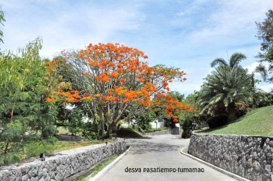 Bellarocca Island Resort and Spa: 38