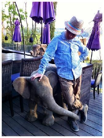 Restaurant Samui-Thai : Ich mag diesen Ort und ich mag diesen kleinen Elefanten (Gabriel Ben Iseli, 11Jahre)