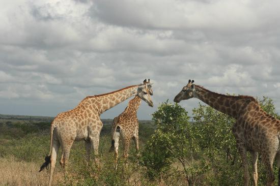 Bushwise Safaris: Photo taken whilst staying at Bushwise