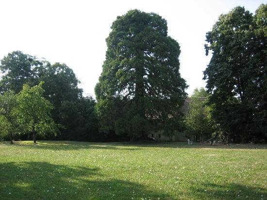 Chaudenay, فرنسا: Parkähnlicher Garten mit Mammutbaum