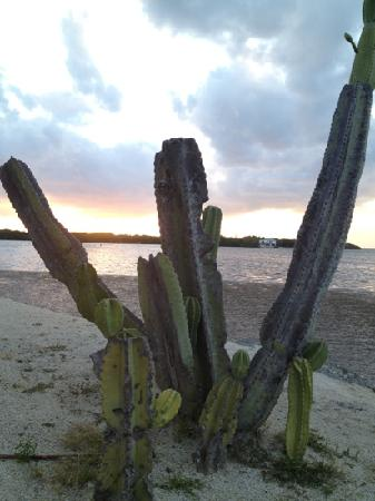 Gulf View Waterfront Resort: Cactus on the private gulf shore