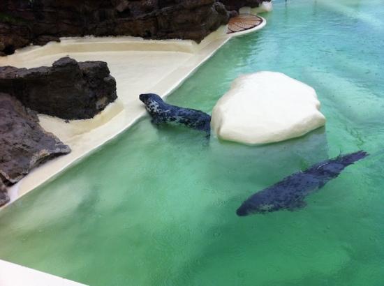 Aquarium de Biarritz: les phoques de Biarritz
