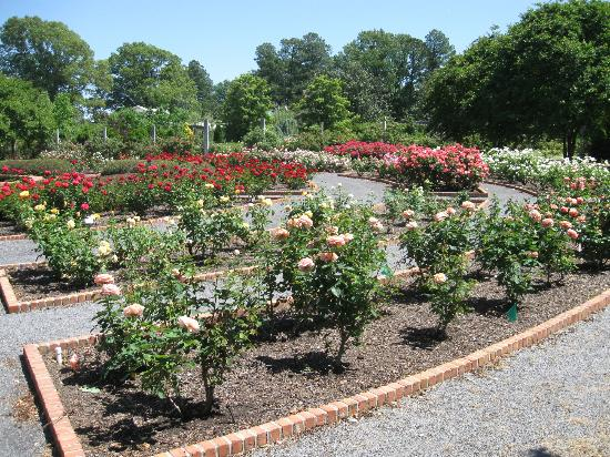 Rose Garden Picture Of Memphis Botanic Garden Memphis Tripadvisor