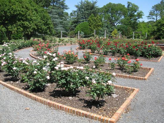 Memphis Botanic Garden: Rose Garden