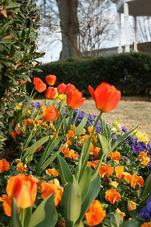 Marietta Square: Flowers in the Park