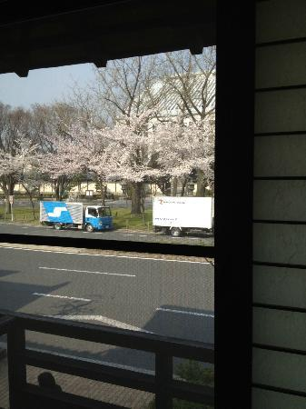 Ohanabo: Cherry blossoms across the road