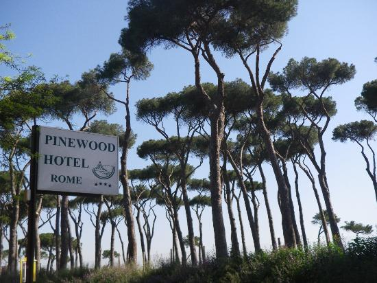 Pinewood Hotel : Parc de pins face à l'hôtel