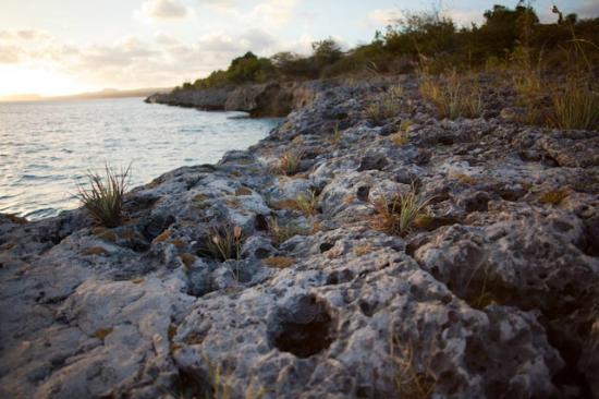 Caribbean Club Bonaire: Lovely OilSlick dive site cliffs to jump from (behind hotel)