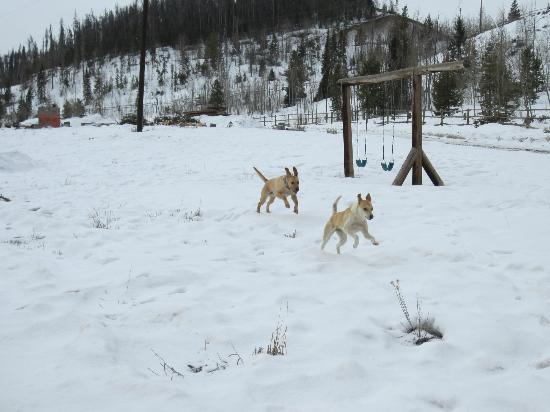 Aspen Canyon Ranch: Sam chasing Cali!