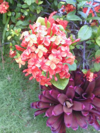 Evamer: Flowers