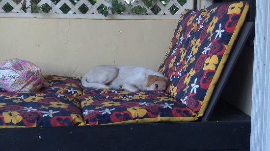 Evamer: Neighbor's dog sleeping on our porch