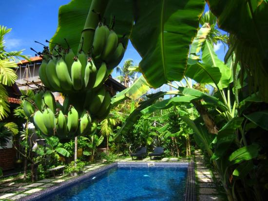 Petit Villa Boutique & Spa: Bananas growing on the lush foliage all around the courtyard.