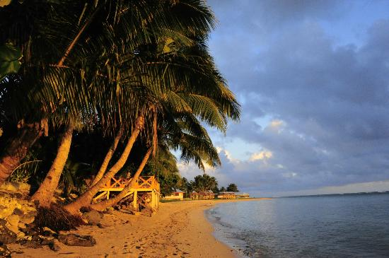 Vacations Beach Fales: coconut trees and sandy beach in the golden morning glow