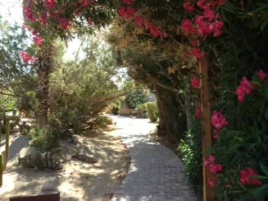 Sunnyvale Garden Suites Hotel - Joshua Tree National Park: walkway