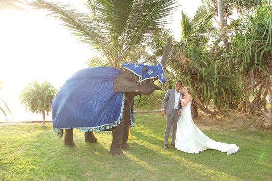 South Point Villa: elephant Feb 2011