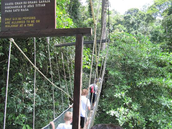 Poring Hot Spring and Nature Reserve canopy walk & canopy walk - Picture of Poring Hot Spring and Nature Reserve ...