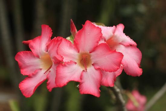 Hotel Au 'Ti Sucrier: fleurs du jardin devant les studios