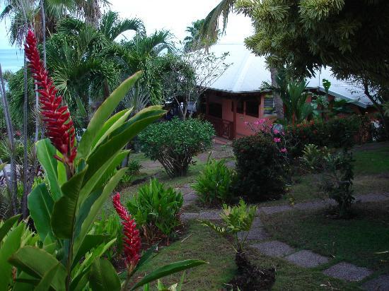 Hotel Au 'Ti Sucrier: vue du jardin de l'hotel