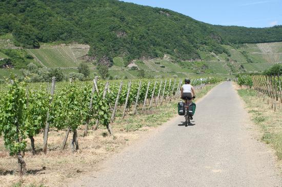 Mosel Radweg: Moselradweg/Mosel Bike Tour