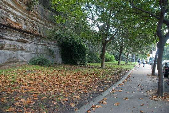 Millers Point: Autumn colours