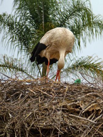 Riad Alegria: stork 2!!