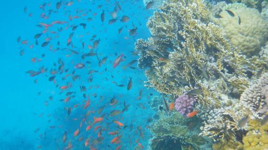 Sharm El Luli: sott'acqua 1