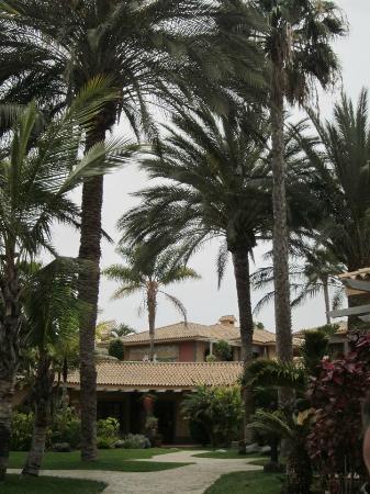 Hotel Dunas Suites and Villas Resort: jardines cerca de la piscina
