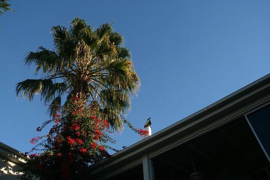 Blackheath Lodge: Garden