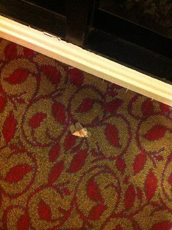 Sheraton Reston Hotel: damaged carpet
